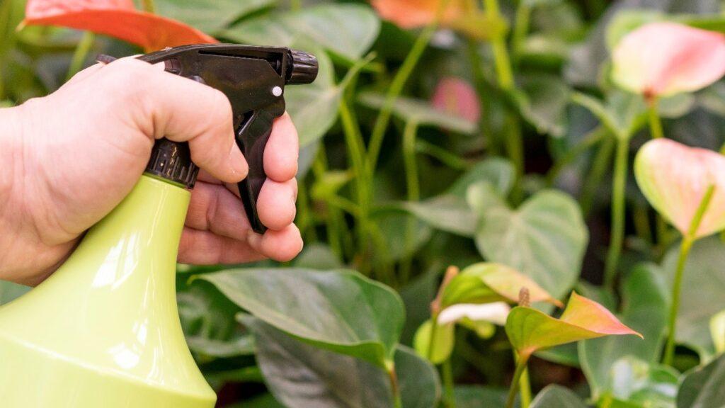5 Pesticidas Caseros