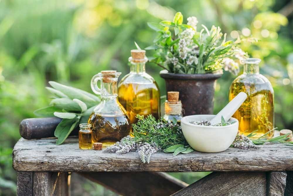 5 plantas medicinales que puedes cultivar en casa